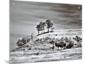 Trees on Hill by I.W.