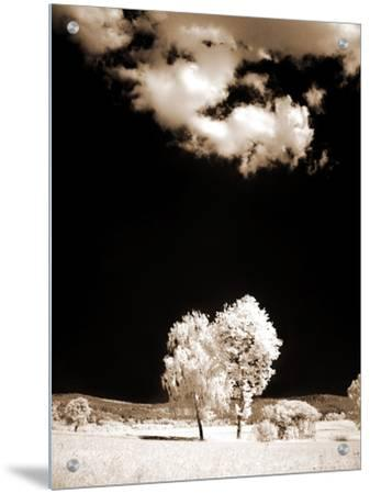 Two Trees Stand in Field