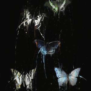 Butterflies Decay by IA London