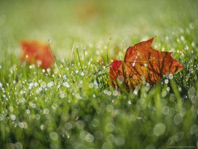 Fallen Autumn Leaf, Scotland by Iain Sarjeant