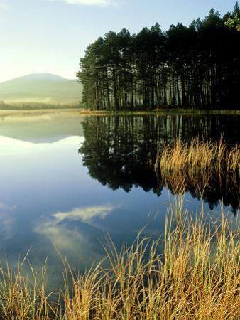 Loch Garten, Strathspey, Scotland by Iain Sarjeant
