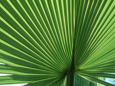 Palm Leaf, Scotland by Iain Sarjeant