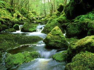 Stream and Mossy Boulders, Scotland by Iain Sarjeant