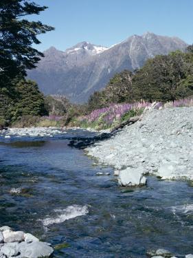 Cascade Creek and Stuart Mountains, South Island, New Zealand by Ian Griffiths