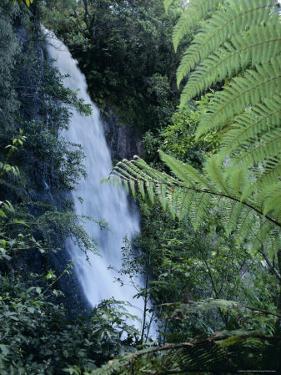 Waiere Falls Near Te Wairoa, North Island, New Zealand, Pacific by Ian Griffiths
