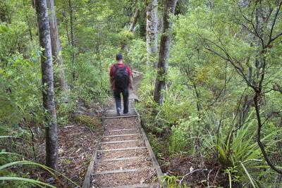 Man Hiking on Waiomu Kauri Grove Trail