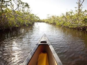 A Canoe in Mangroves, Everglades National Park, Florida by Ian Shive