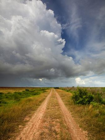 Mad Island Marsh Preserve, Texas: a Dirt Path Leading Throughout the Marsh. by Ian Shive