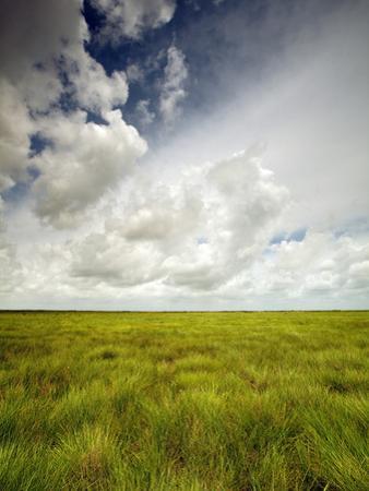 Mad Island Marsh Preserve, Texas: Landscape of the Marsh's Coastal Plains Near Sunset. by Ian Shive