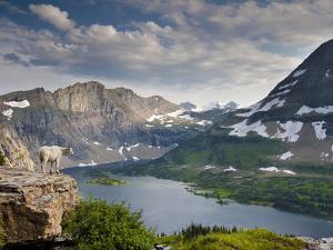 Mountain View and Hidden Lake Along Hidden Lake Trail, Glacier National Park, Montana by Ian Shive
