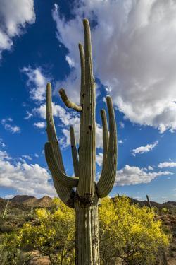 Saguaro National Park, Arizona by Ian Shive