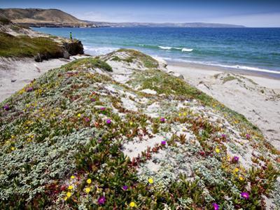 Santa Rosa Island, Channel Islands National Park, California. Wildflowers. by Ian Shive