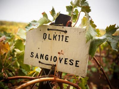 Vineyards by Ian Shive