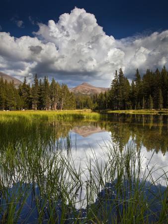 Yosemite National Park, California: Pond Along Entrance Gate at Tioga Pass and Tuolumne Meadows.