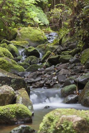 Stream on Kauaeranga Kauri Trail