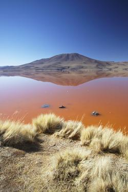 Laguna Colorada on the Altiplano, Potosi Department, Bolivia, South America by Ian Trower