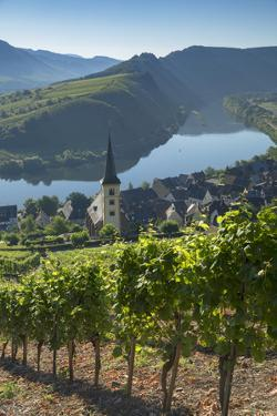 View of River Moselle and St. Lawrence's Church, Bremm, Rhineland-Palatinate, Germany, Europe by Ian Trower