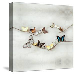 Array of Butterflies by Ian Winstanley