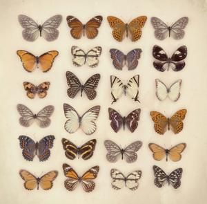 Butterfly Collection by Ian Winstanley