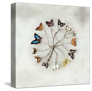 Butterfly Harmony by Ian Winstanley