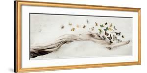 Drift of Butterflies by Ian Winstanley
