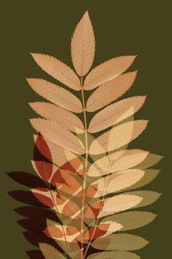 Fall Leaves 2 by Ian Winstanley