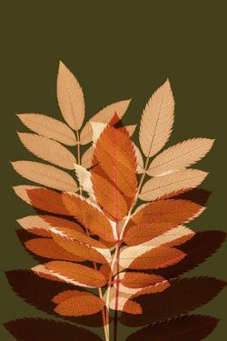 Fall Leaves 4 by Ian Winstanley