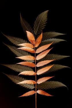 Fall Leaves 6 by Ian Winstanley
