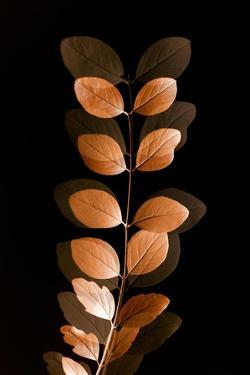 Fall Leaves 7 by Ian Winstanley