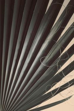 Fan Palm Detail 2 by Ian Winstanley