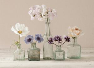 Flower Collection II by Ian Winstanley