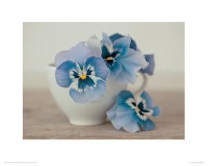 Pansies by Ian Winstanley
