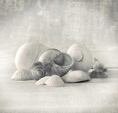 Still Life of Shells II