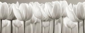 White Tulips by Ian Winstanley