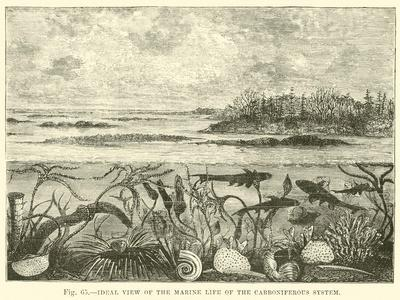https://imgc.allpostersimages.com/img/posters/ideal-view-of-the-marine-life-of-the-carboniferous-system_u-L-PPW3660.jpg?artPerspective=n