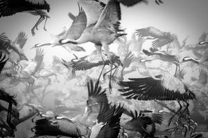 Chaos by Ido Meirovich
