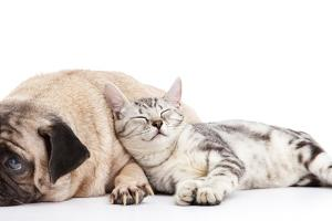 Dog and Cat by ifong