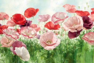 Poppies Pleasure by Igor Levashov
