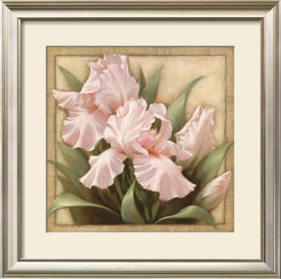 Pretty in Pink Irises by Igor Levashov