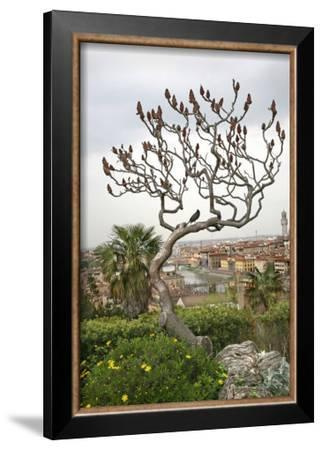 Bird on a Dante Tree, Florence by Igor Maloratsky