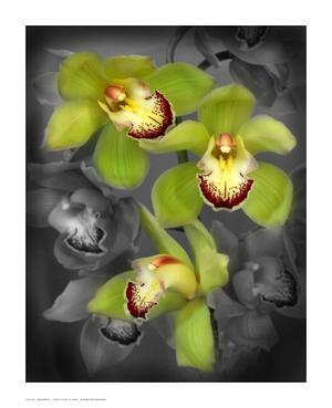Cymbidium Orchid Green by Igor Maloratsky