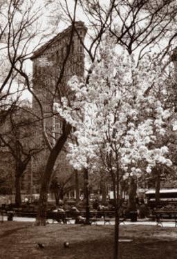 Flatiron Building, Spring by Igor Maloratsky