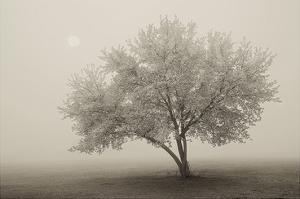 Forever Spring by Igor Svibilsky