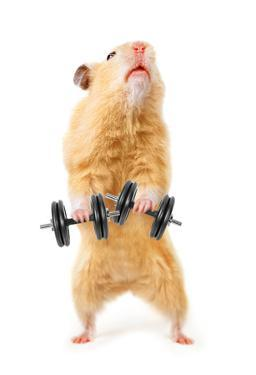 Hamster With Bar Isolated On White by IgorKovalchuk