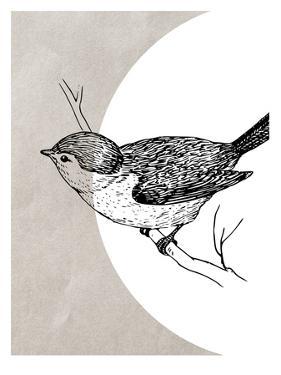 Bird 1 by Ikonolexi