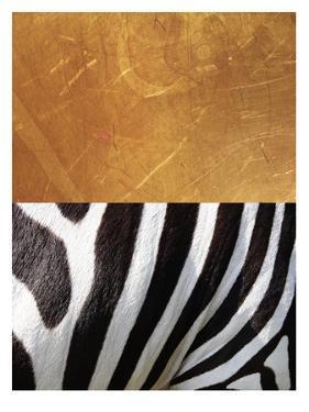 Zebra by Ikonolexi