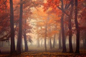 Feel by Ildiko Neer