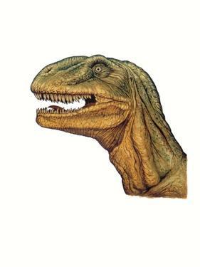 Illustration of Allosaurus, Close Up of Head