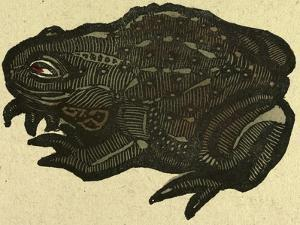 Illustration of English Tales Folk Tales and Ballads, a Toad