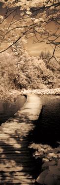 A Quiet Stroll II by Ily Szilagyi